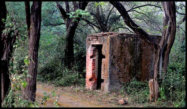 Malcha Mahal: Running tracks in delhi ncr