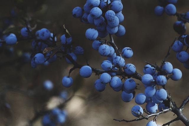 Blueberries: Natural Fat Burner