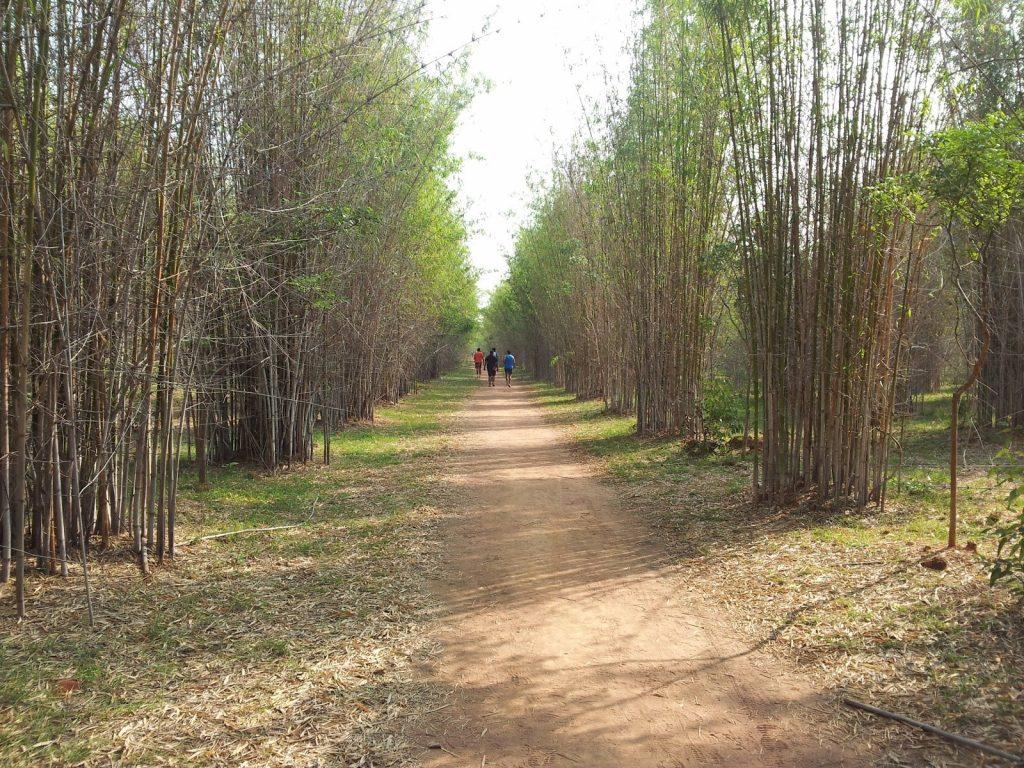 Beautiful Running Tracks in Bangalore - Hennur Trail