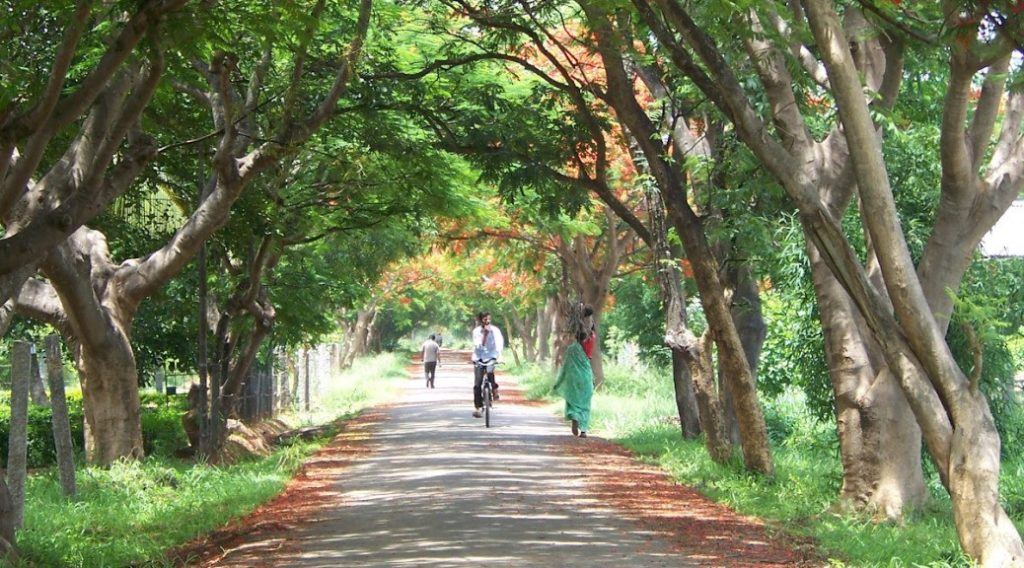 Beautiful Running Tracks in Bangalore - GKVK Campus