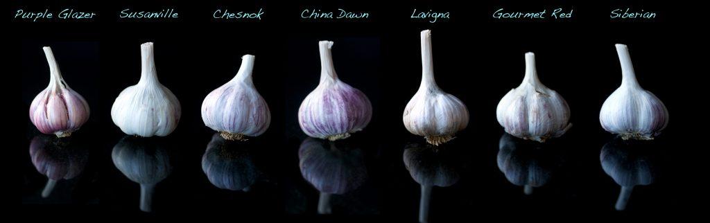 10 amazing garlic benefits that you enjoy daily fitso - Surprising uses for garlic ...