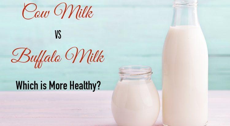 cow milk vs buffalo milk