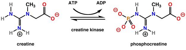 creatine : creatine vs whey