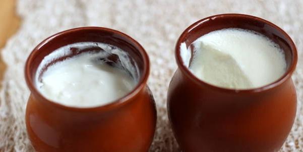 curd : curd vs yogurt
